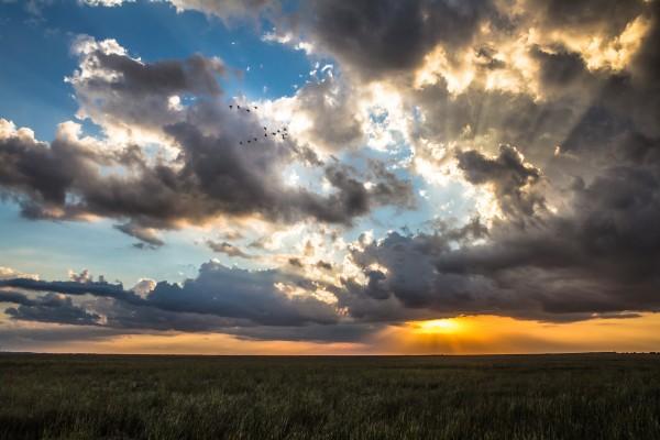 Everglades Sunset by Danielle Farrell
