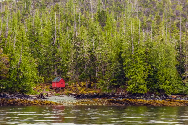 Red Cabin on Edge of Alaskan Waterway in Evergreen Forest by Darryl Brooks
