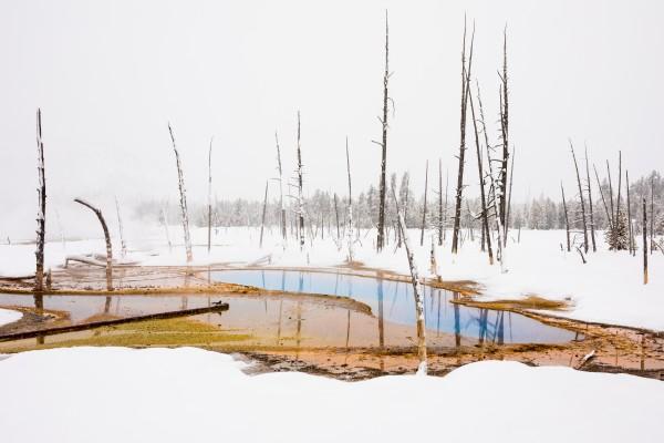 Yellowstone Winter by Dave Burwell