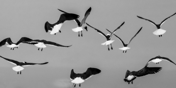 Takeoff by Dave Therrien