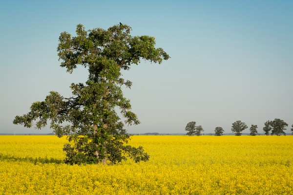 Fields of Gold by David Brophy