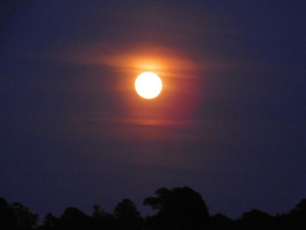 Full Moonlight by Debbie Caughey