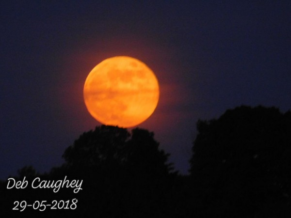 Harvest Moon 2018 by Debbie Caughey