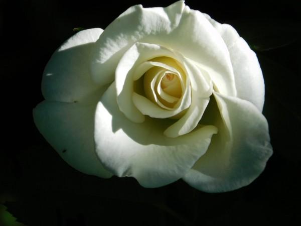 Bright white by Debbie Caughey