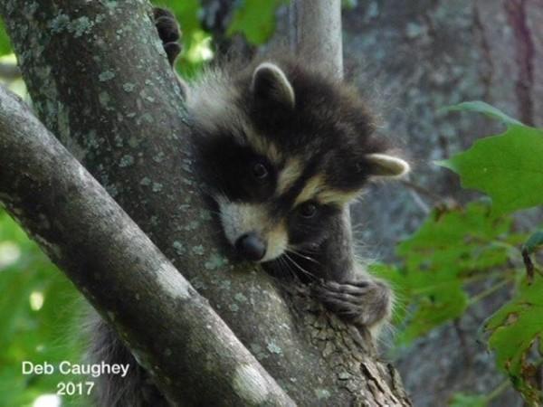Shy Bandit by Debbie Caughey
