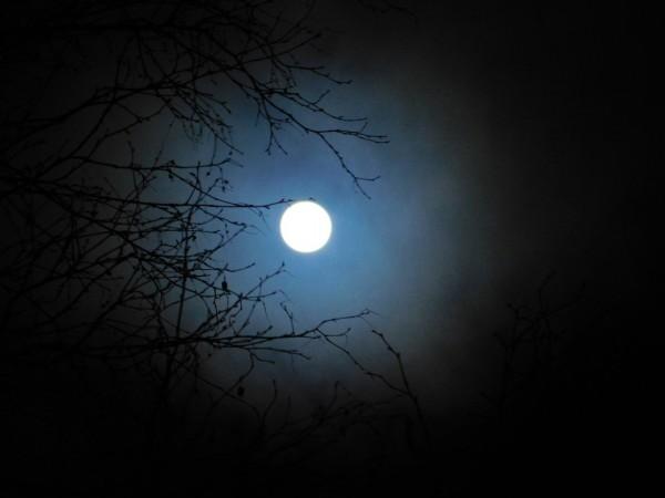 Cold Moon by Debbie Caughey