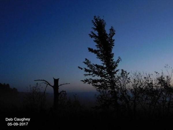 Early Fall Fog by Debbie Caughey