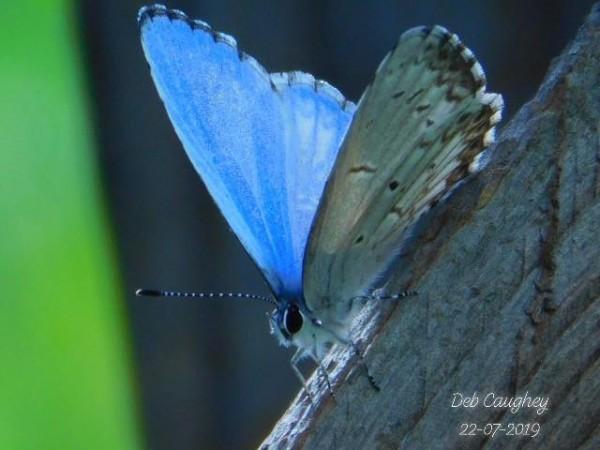 Azure Blue by Debbie Caughey