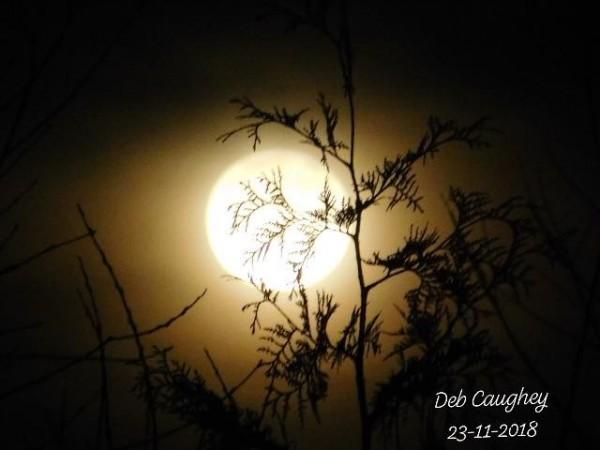 Moonlit cedar by Debbie Caughey