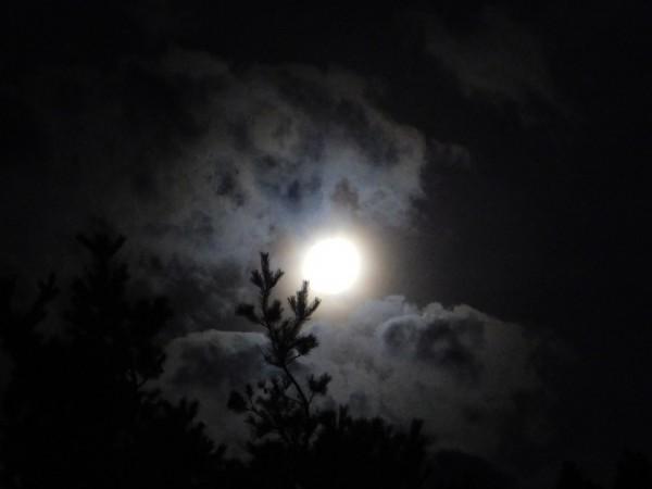 By Moonlight by Debbie Caughey