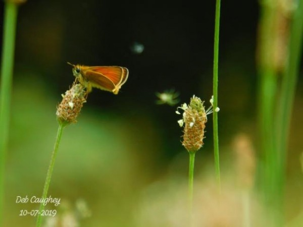 Tiny world  by Debbie Caughey
