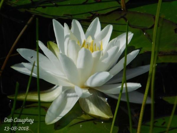 Marsh Beauty by Debbie Caughey