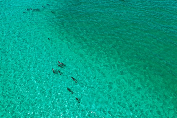 Dolphins30a by Destin30A Drone