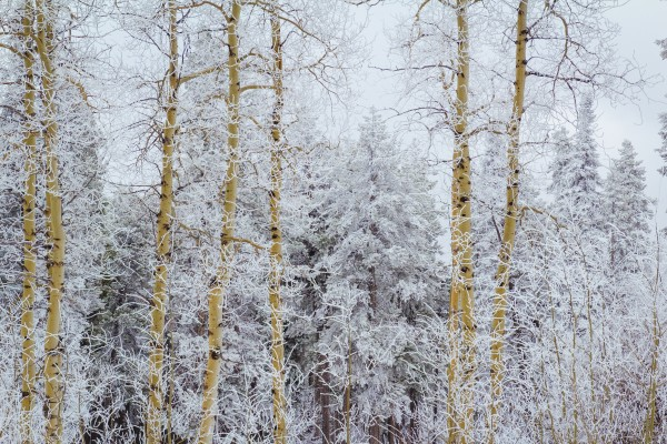 Frosted Forest by Diane Mintle