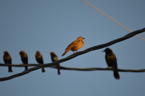 Birds on the Wires  Print