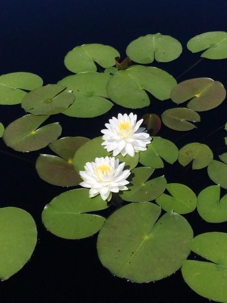 Denver-Botanical-Gardens-9 by Dogtown Guy