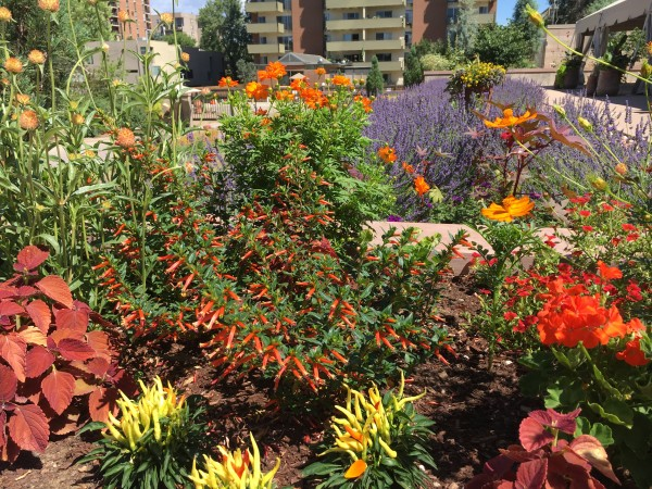 Denver-Botanical-Gardens-12 by Dogtown Guy