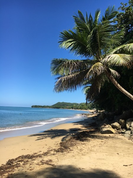 Rincon-Puerto-Rico-2019-11 by Dogtown Guy