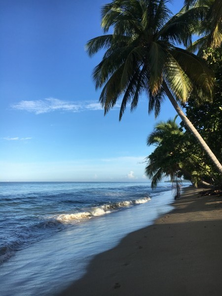 Rincon-Puerto-Rico-2019-21 by Dogtown Guy