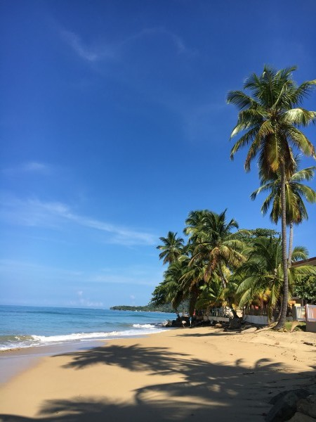 Rincon-Puerto-Rico-2019-20 by Dogtown Guy