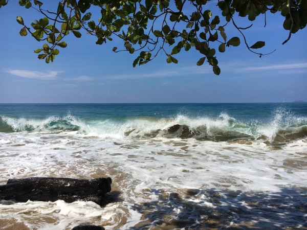 Rincon-Puerto-Rico-2019-19 by Dogtown Guy