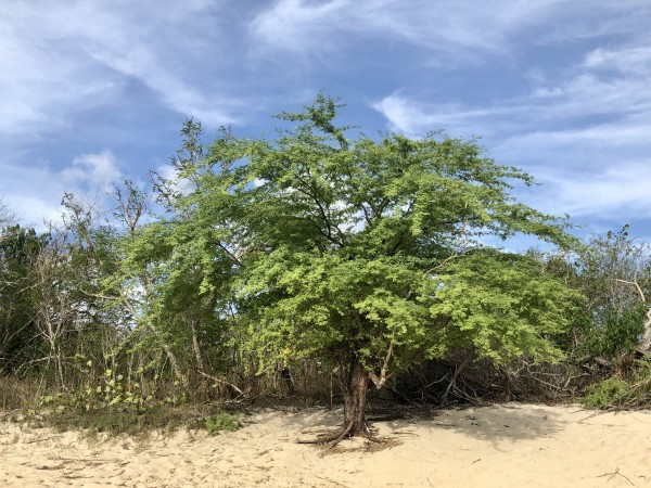 El-Combate-Beach-Puerto-Rico-2 by Dogtown Guy