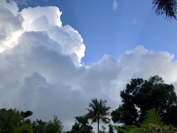 El-Yunque-Rainforest-Puerto-Rico-2 by Dogtown Guy
