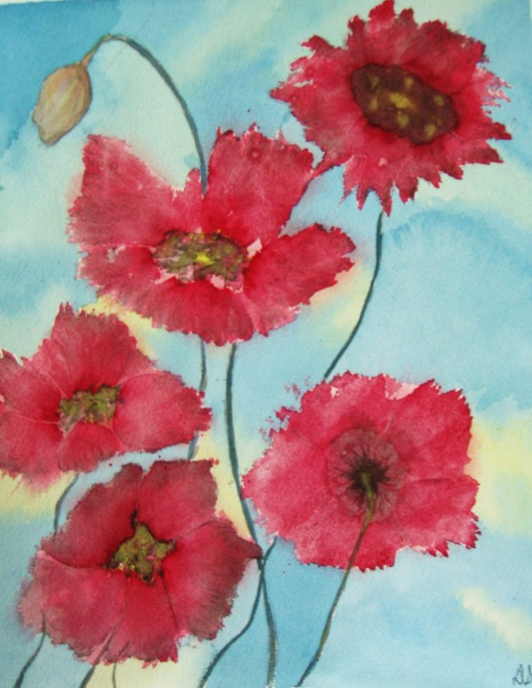 Poppies by Donna Stares