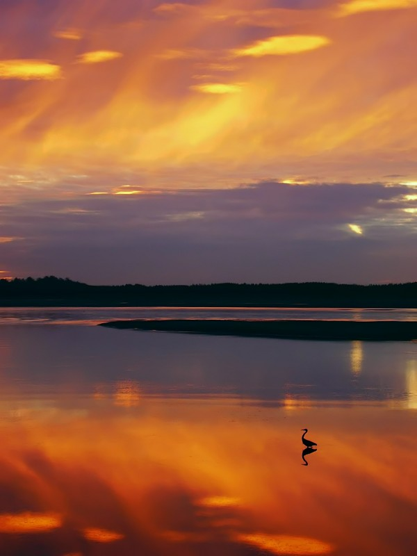 Heron by Ed Eaton