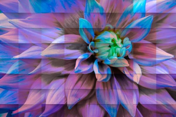 Avatarian Flower  by Edwin De Smet