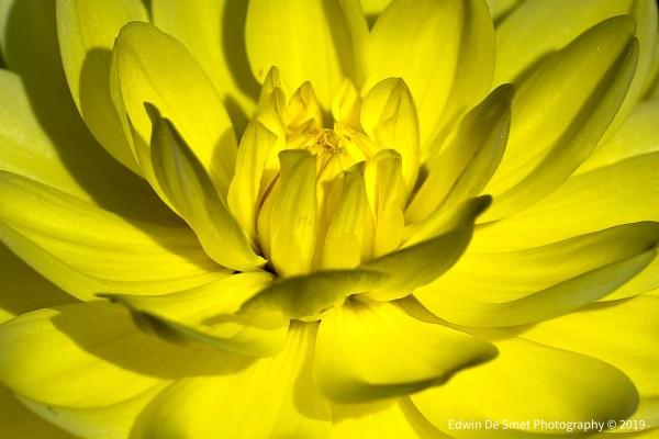 Flower by Edwin De Smet