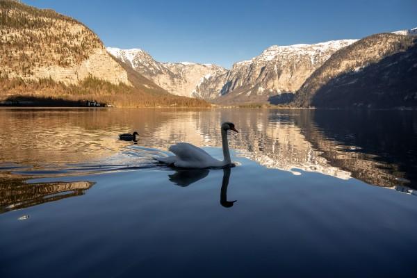 Swan Mountain  by Elitephotos