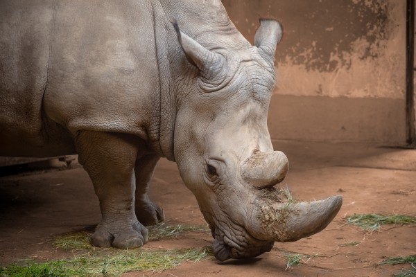 Rhino  by Elitephotos