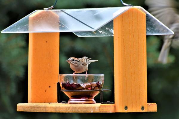 Bird Feeder 2 by Eric Schmitz
