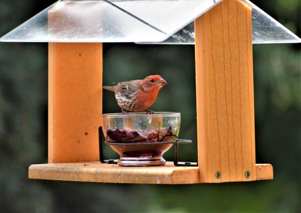 Bird Feeder by Eric Schmitz
