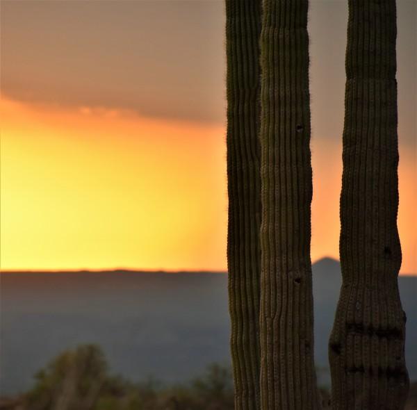 Sunset Cactus by Eric Schmitz