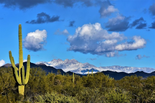 Fresh New Years Snow on Four Peaks by Eric Schmitz
