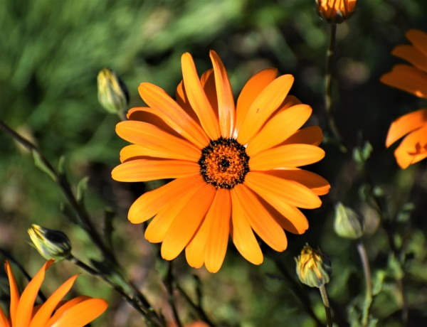 In Bloom by Eric Schmitz