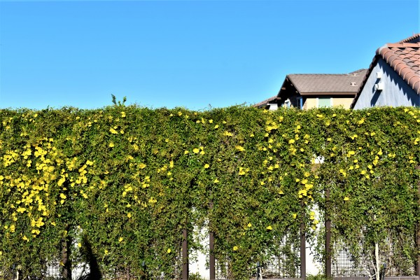 Wall of Yellow by Eric Schmitz