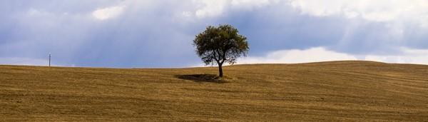 Tuscany Tree by Fabien Dormoy