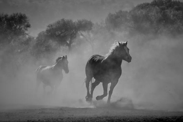 Horses by FarmStudioCo