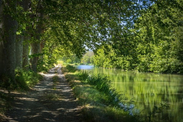 View of the plane trees on the edge of the Canal du Midi in the south of France near Carcassonne by Francois Lariviere