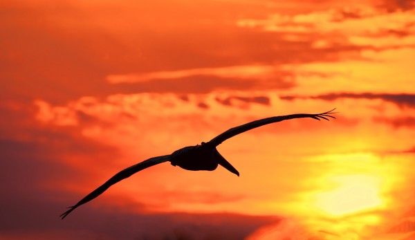 Sunrise Flight by HH Photography of Florida