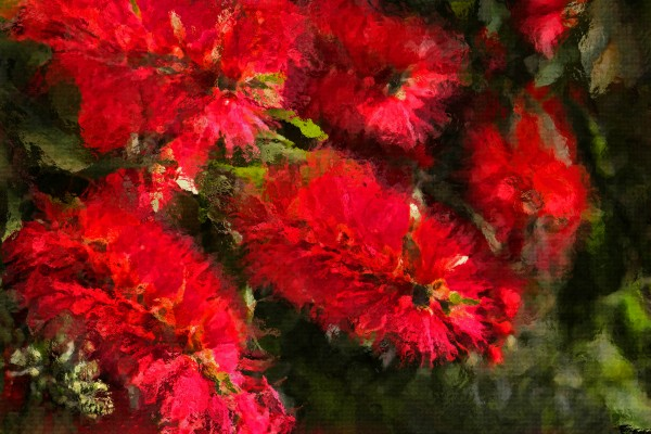 Bottle Brush Abstract by HH Photography of Florida