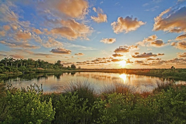 Floridas Natural Beauty  by HH Photography of Florida