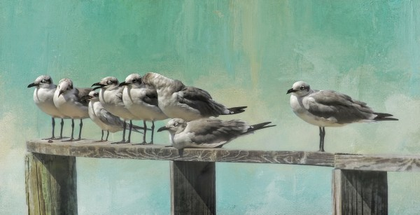 Dockside Seagulls by HH Photography of Florida