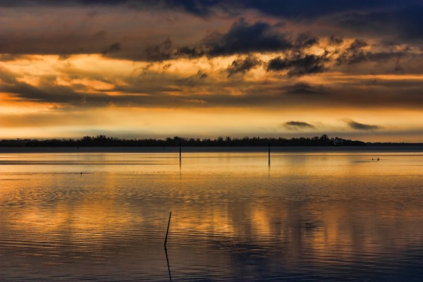 Bathed in Gold by HH Photography of Florida
