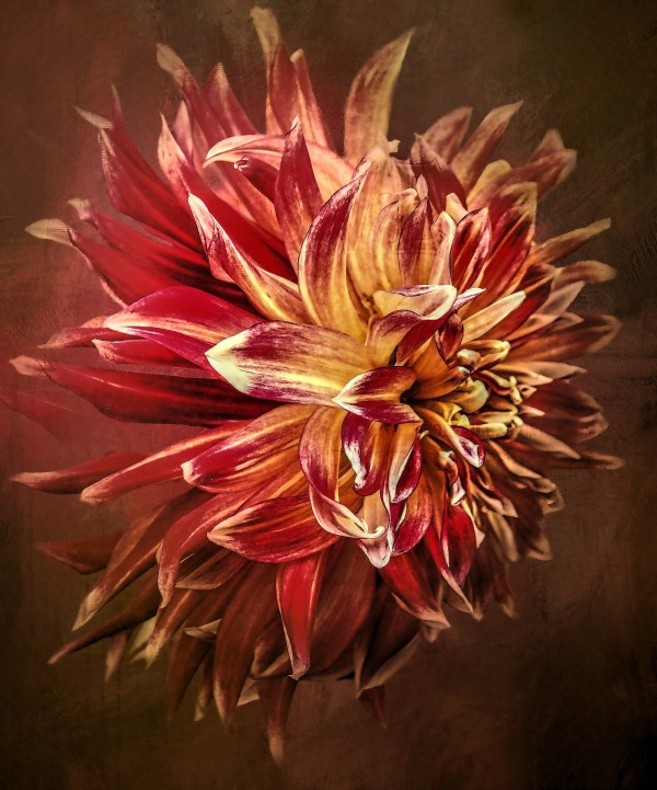 Dahlia Drama by HH Photography of Florida