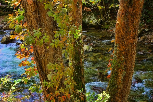Smoky Mountain Stream 2 by HH Photography of Florida