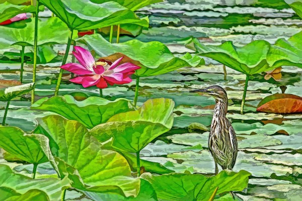 Lotus Blossom And Heron by HH Photography of Florida